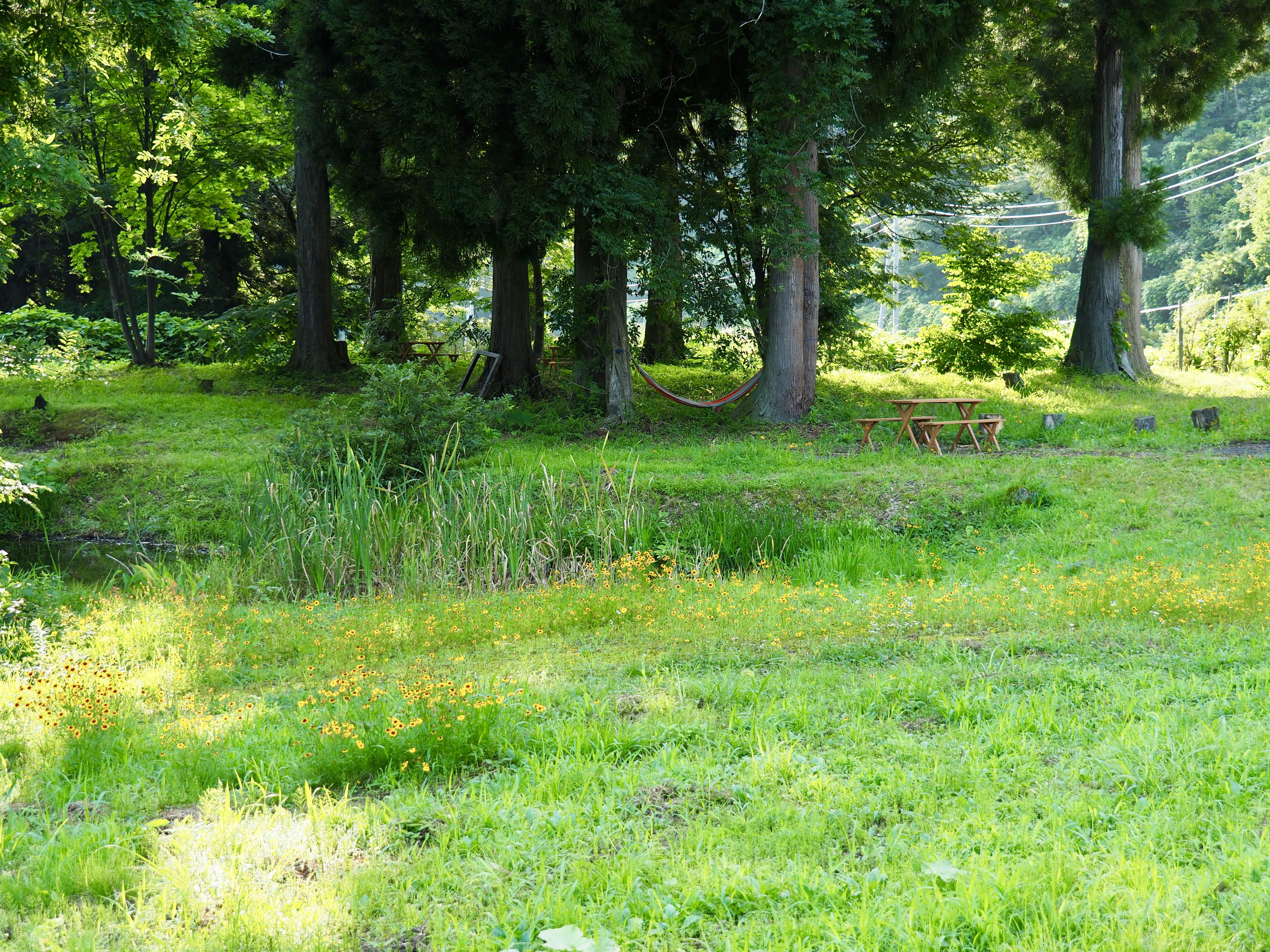 醸す森の庭
